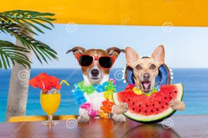 dogs-on-the-beach-eating-watermelon